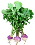 Turnip Greens Bunch